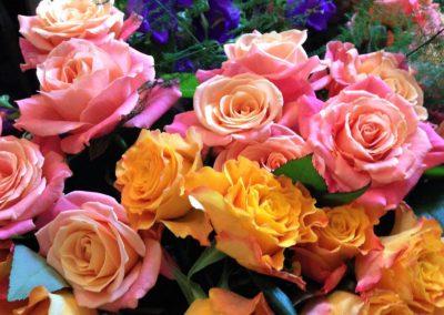 Pink and orange roses