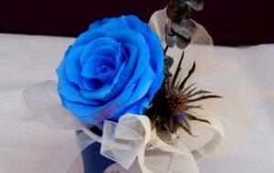 Freeze dried blue rose tea cup