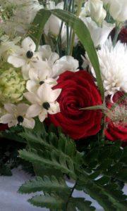 Red rose nestled amongst the whites by Shrinking Violet
